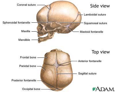 skull-of-a-newborn